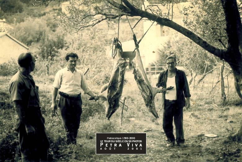1968. Découpe du sanglier à l'Oreta. La carcasse bien attachée à l'arbre, Alexandre Albertini et Dominique Defendini ont partagé la bête. Observez, derrière l'animal, la scie à métaux tenue par un quatrième larron. Collection Ginette Albertini.