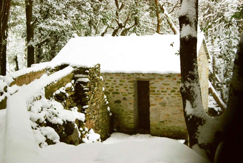 Mulinu vivu sous la neige. Février 2012. Photo Angeline Rocchietti