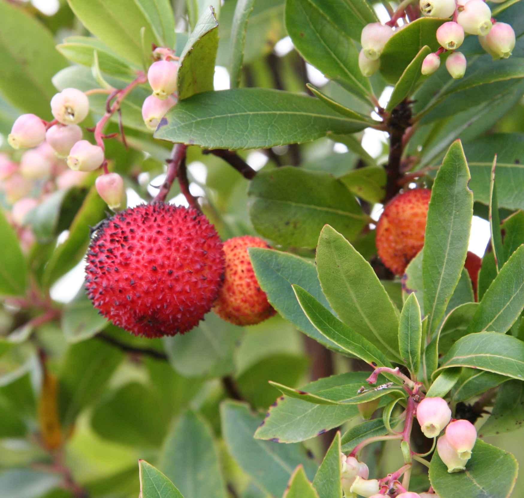 Le maquis - a macchja - inextricable, est un jardin inépuisable de ...