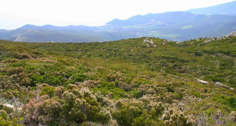 Le maquis au-dessus de la vallée de Pietracorbara. Mai 2009. Photo D.A.