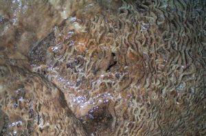 Vagues de calcite dans la grotte. Janvier 2000. Photo D.A.