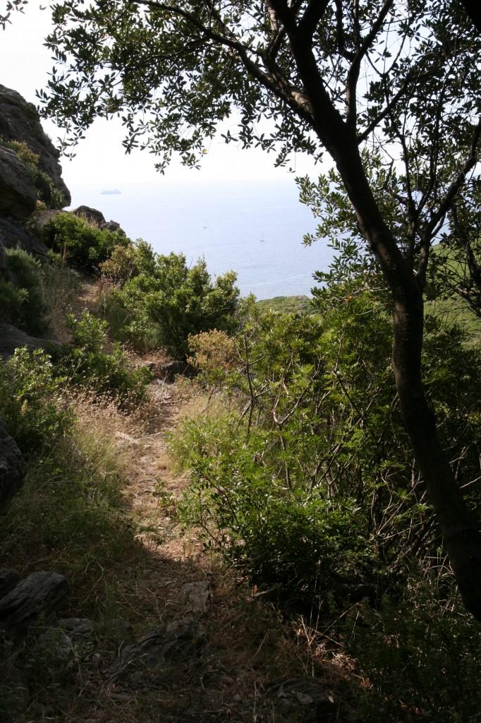 Sentier botanique Pietracorbara - Castellare